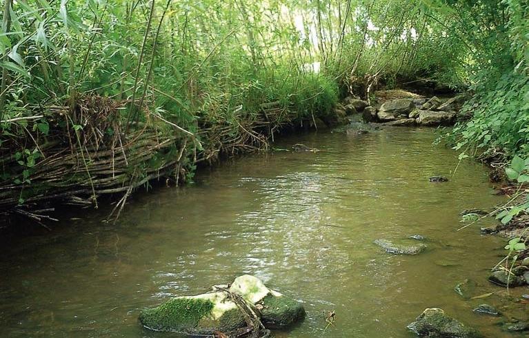 restauration-cours-d-eau